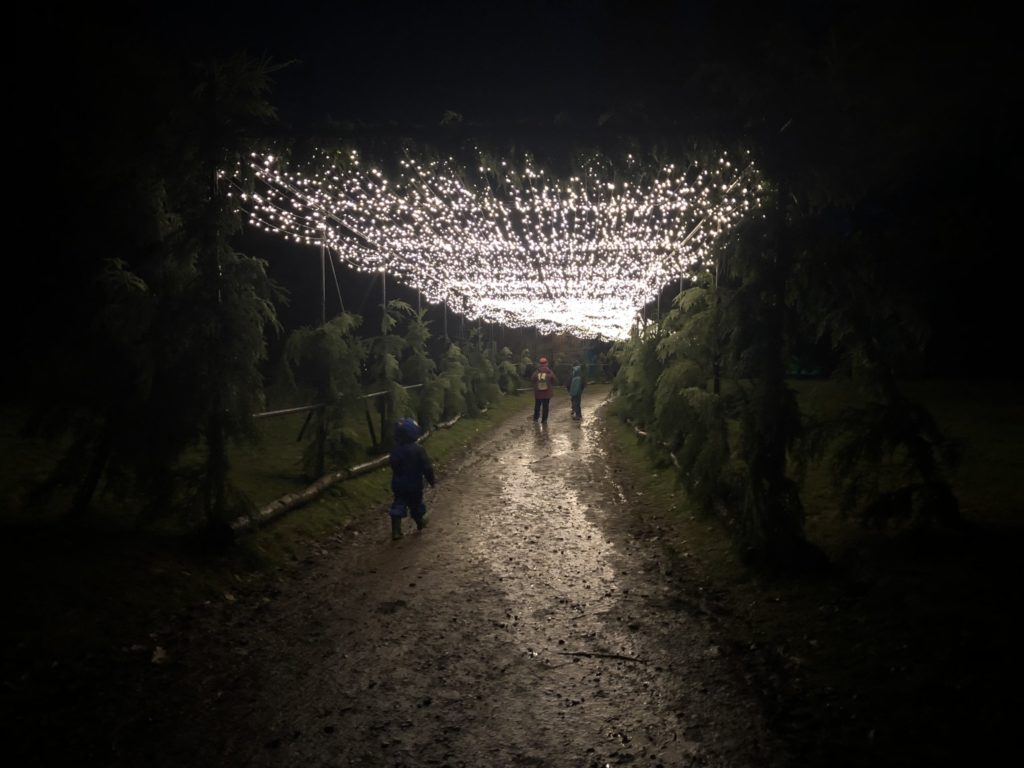 Christmas at Bedgebury Christmas Lights Bedgebury Pinetum #christmasatbedgebury